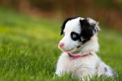 dog-wallpaper-blue-eyes-1080x608